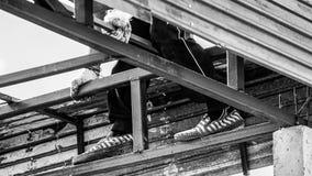 Работа работника отсутствие безопасности Стоковое Фото