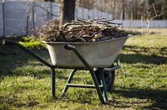 Работа сада Подрезанные ветви молодых деревьев лежат в тачке, которая стоит в саде стоковые фотографии rf