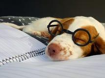 Работа тяжелых дней на школе щенка Стоковая Фотография