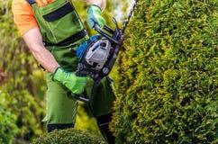 Работа фигурной стрижки кустов садовника стоковое фото rf