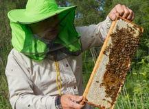 Работа beekeeper снаружи Стоковое фото RF