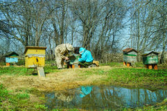 Работа 3 beekeepers на пасеке на крапивнице день солнечный Стоковые Изображения