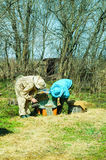 Работа 3 beekeepers на пасеке на крапивнице день солнечный Стоковая Фотография