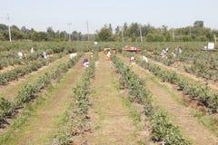 Работники поля переселенца Стоковое Изображение RF