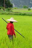 работники риса Индонесии стоковые фото