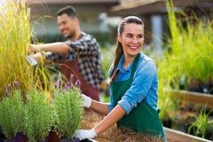 Работники садового центра стоковое фото rf