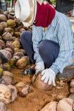 Работники сортируют кокос для резать и аранжировать для breedi стоковые фотографии rf