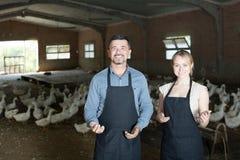 Работники стоя среди белых gooses Стоковые Изображения