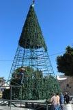 Работники строя рождественскую елку в Вифлееме Стоковое Изображение