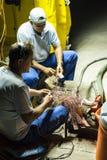 Работники телекоммуникаций ремонтируя кабель Гавану Стоковое фото RF