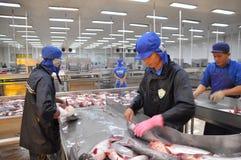 Работники убивают сома pangasius перед переносить их к следующей технологической линии в фабрике морепродуктов в перепаде Меконга Стоковые Изображения RF