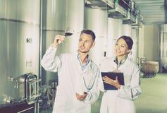 Работники человека и женщины на manufactory винодельни Стоковое фото RF