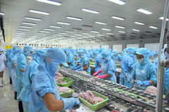 Работники filleting сом pangasius в фабрике морепродуктов в перепаде Меконга Вьетнама Стоковые Фотографии RF