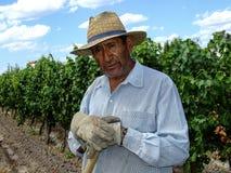 Работник виноградной лозы стоковые изображения rf