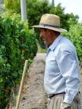 Работник в винограднике стоковые изображения