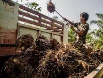 Работник в плантации plam масла Стоковые Фотографии RF