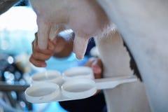 Работник доя молоко коровы формы молока Стоковое Фото