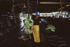 Работник Коста-Рика банана стоковые фотографии rf