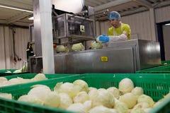 Работник кладет капусты к destalker Стоковые Фото