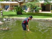 Работник очищая рыбный пруд стоковое фото