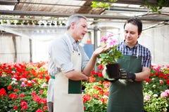 Работник парника держа цветочные горшки Стоковое фото RF