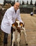 Работник работая с milky коровами и усмехаясь в cowhouse внешнем Стоковое Фото
