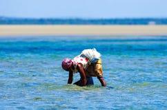 Работник собирая мидий в побережье Мозамбика стоковые фото
