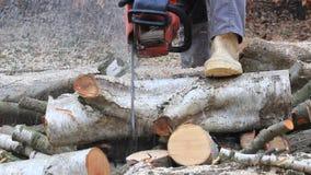Работник с цепной пилой газа, звуком, вырезыванием, древесиной sawing для швырка сток-видео