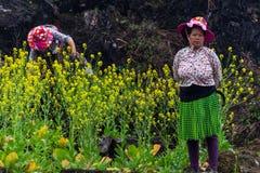 Работник этнического меньшинства Hmong аграрный стоковая фотография rf