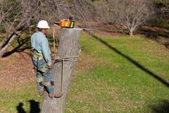 работник chainsaw Стоковые Изображения RF