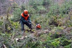 работник lumberjack пущи Стоковое Фото