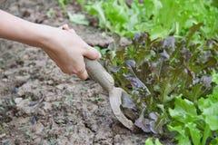 работы женщины кухни сада стоковое фото rf