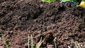 Работы сада, полоть земли граблями от засорителей акции видеоматериалы