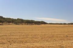 Равнина Golded Стоковая Фотография