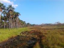 равнина и morichales стоковая фотография rf
