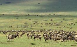 равнины masai mara стоковая фотография