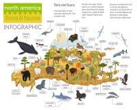 Равновеликая флора и фауна 3d Северной Америки составляют карту элементы angoras иллюстрация штока