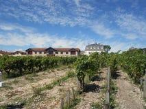равномерные виноградники в Франции Стоковое Фото