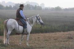 Радетель на лошади в свете утра стоковая фотография rf