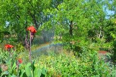 Радуга в саде стоковое фото rf