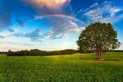 Радуга над полем зеленого цвета весны стоковая фотография rf