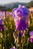 Радужка в заходе солнца Стоковые Фото