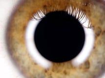 радужка глаза Стоковые Фото