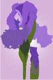 радужка цветка иллюстрация вектора