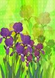 радужка цветков иллюстрация штока