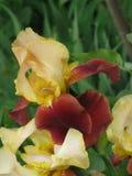 радужки сада Стоковые Изображения