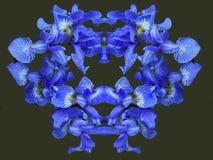 Радужки цветков кровопролитное Цветы лета цветет лепестки bluets яркое Падения ветви росы стоковые фотографии rf