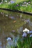 Радужки Стоковое фото RF