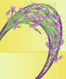 радужки Стоковое Изображение RF