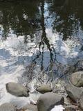 Разбавленные деревья Стоковое Изображение RF